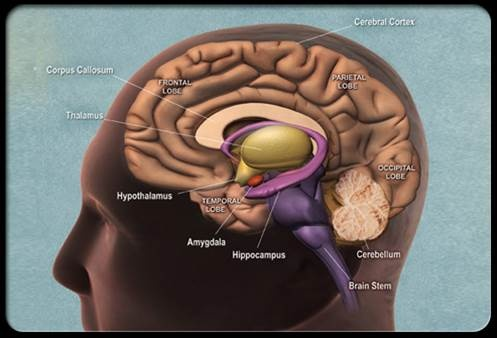 case study disorders of brain function Central auditory processing disorder: a case study james jerger  behavioral manifestations of documented brain  tive and expressive language function has invit-.